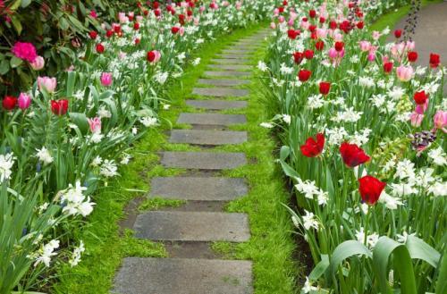 Озеленение двора частном доме. Озеленение двора: 155 фото и видео описание, как выполнить озеленение участка