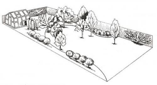 Какие лучше деревья сажать на участке. Планируем создание плодоносящего сада